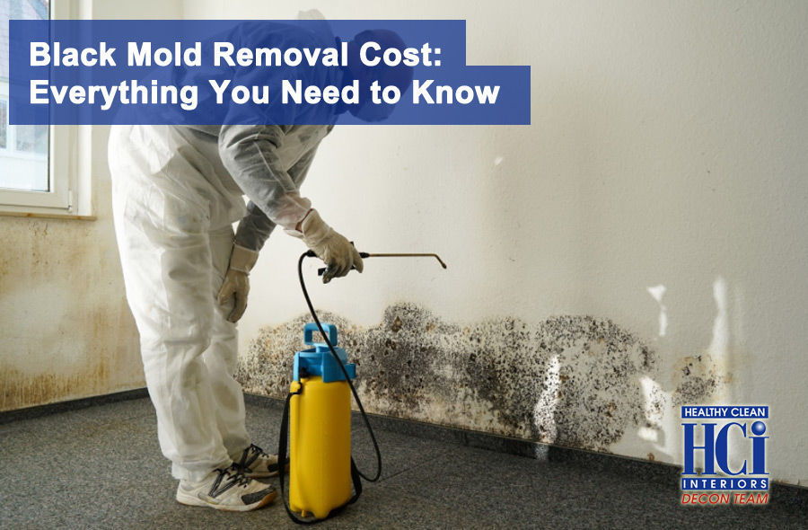 Black Mold Removal Cost: Everything You Need to Know