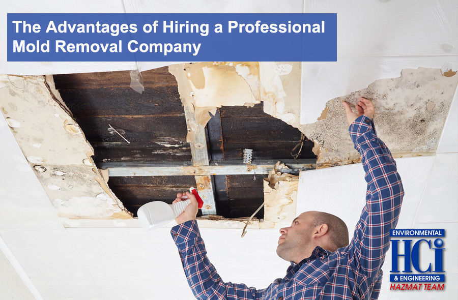 The Advantages of Hiring a Professional Mold Removal Company