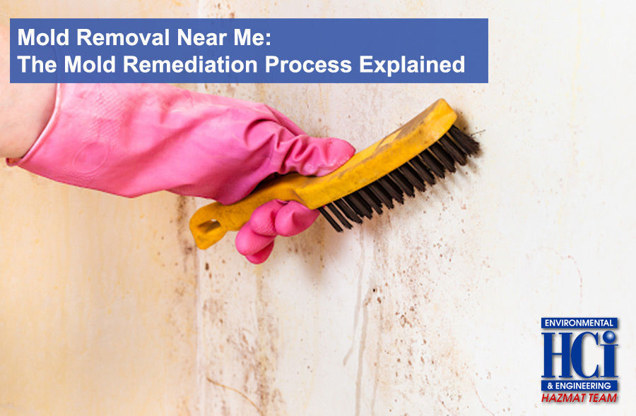 Mold Removal Near Me: The Mold Remediation Process Explained